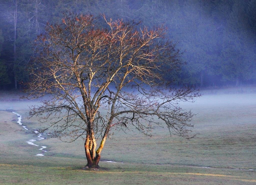 lone tree  by Terrill Welch 2013_01_25 114