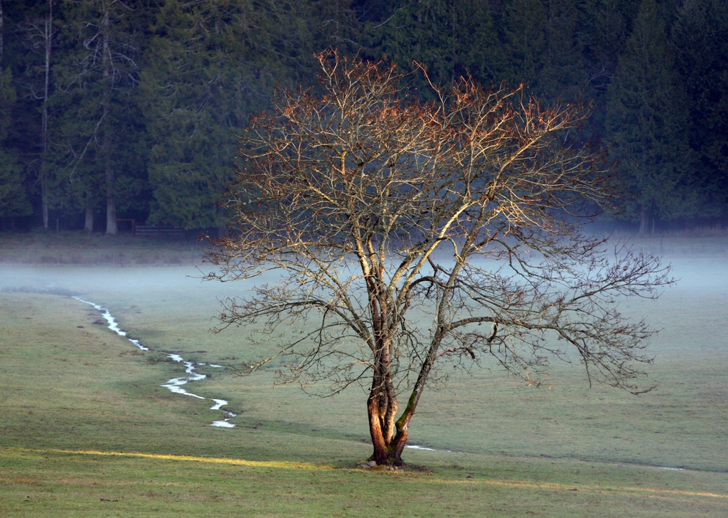 lone tree in field by Terrill Welch 2013_01_25 049