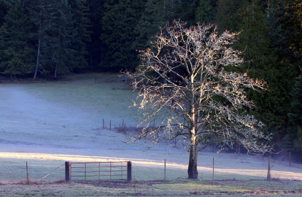 tree by the gate  by Terrill Welch 2013_01_25 067