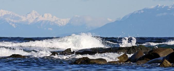West Coast Blues Oyster Bay Mayne Island by Terrill Welch 2013_03_03 229