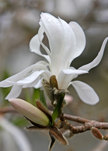 white as white by Terrill Welch 2013_04_07 130