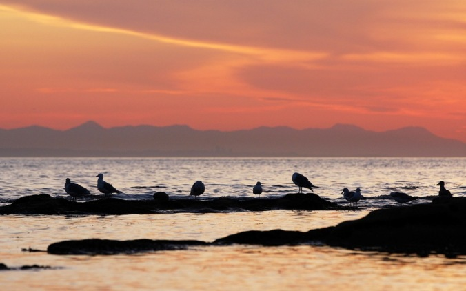 Gulls at sunrise by Terrill Welch 2013_08_22 100