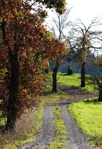 Country Farm Lane on Mayne Island by Terrill Welch 2013_10_13 157