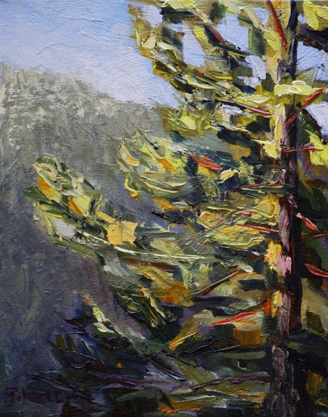 Morning Greets Fir Tree study 10 x 8 inch oil on canvas by Terrill Welch 2013_12_03 040