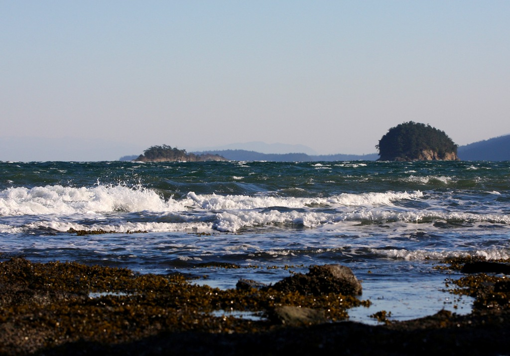Sea View Mayne Island by Terrill Welch 2013_12_06 024