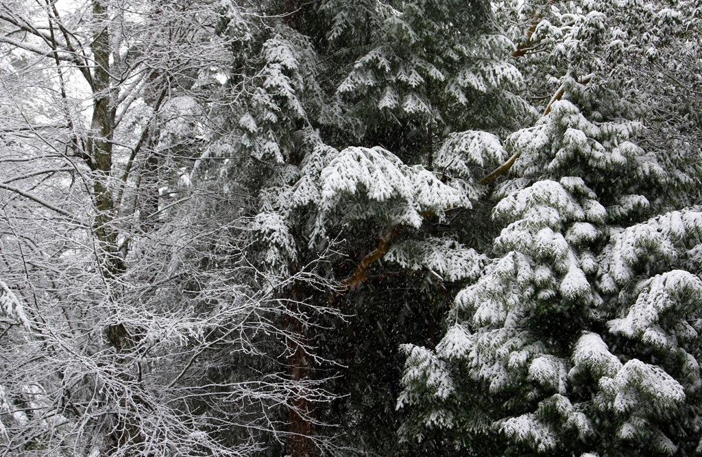 Late February Snow Mayne Island  by Terrill Welch 2014_02_23 010