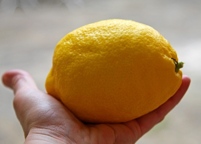 gift of a large lemon by Terrill Welch 2014_04_25 121