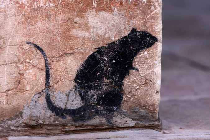 I smell a  rat nearby by Terrill Welch 2014_04_19 108