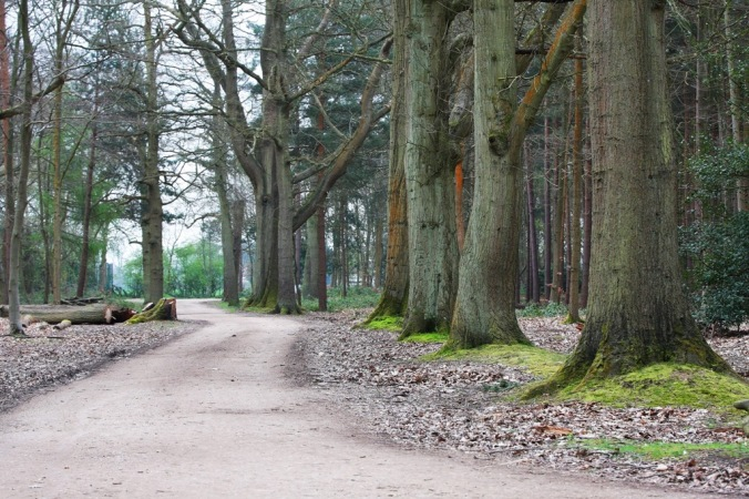 Near the Pinewood Film Studio in Black Park England by Terrill Welch 2014_04_04 043