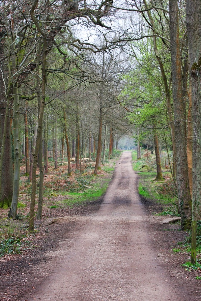 Places in movies near Pinwood Film Studios in Black Park England by Terrill Welch 2014_04_04 039