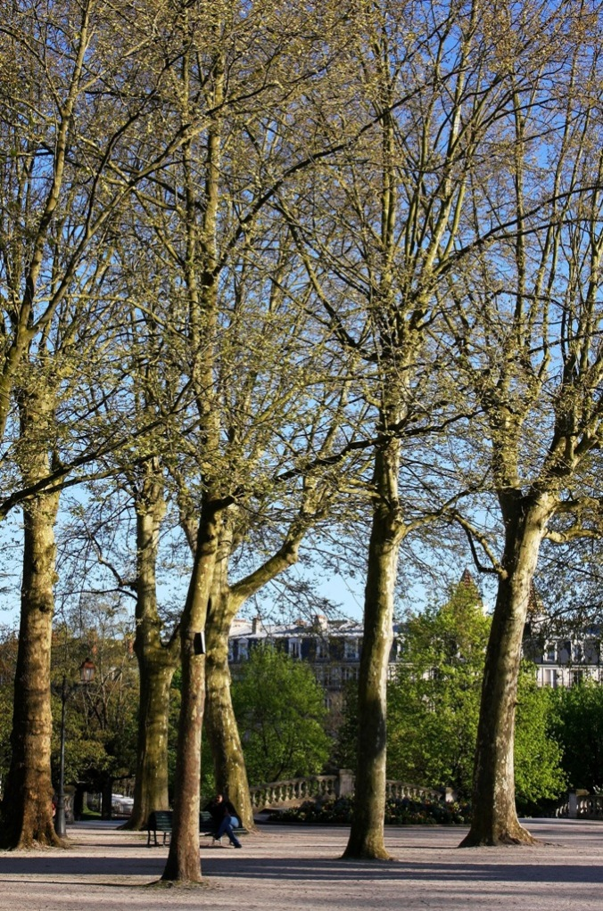 top area of Park Darcy warm April evening  by Terrill Welch 2014_04_08 Dijon France 008