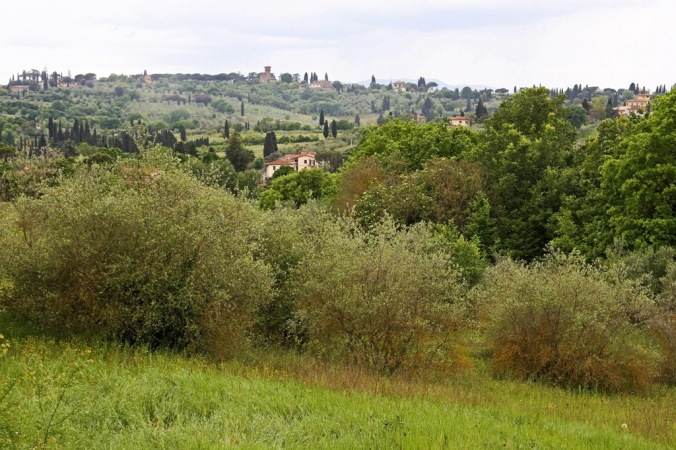 Florence countryside by Terrill Welch 2014_05_01 020