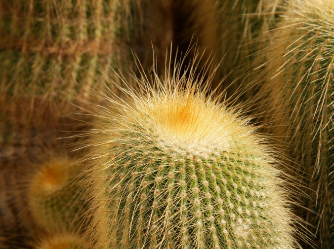 prickly beauties by Terrill Welch 2014_05_08 019