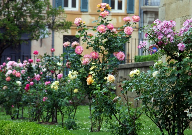 roses at the Cathedrale in Narbonne France by Terrill Welch 2014_05_21 053