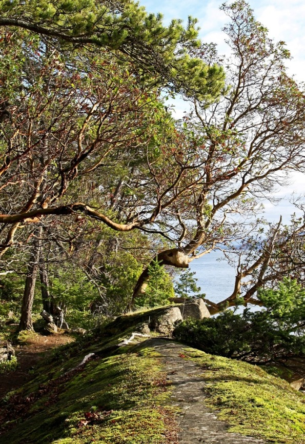 Mayne Island Christmas Arbutus Tree visit 3 by Terrill Welch 2014_12_25 016