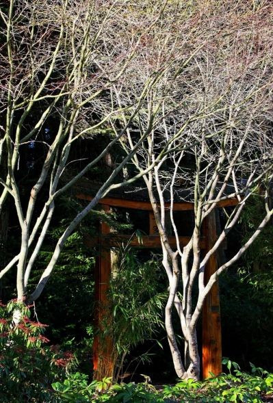 January sun in Mayne Island Japanese Garden by Terrill Welch 2015_01_15 028