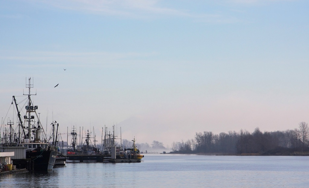 Morning Fog Lifting in Steveston B.C.  by Terrill Welch 2015_01_26 231