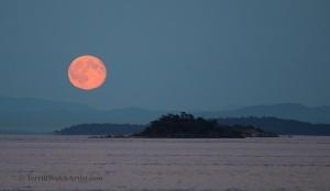 Mayne Island Blue Moon rise July 31 2015 by Terrill Welch 2015_07_31 170