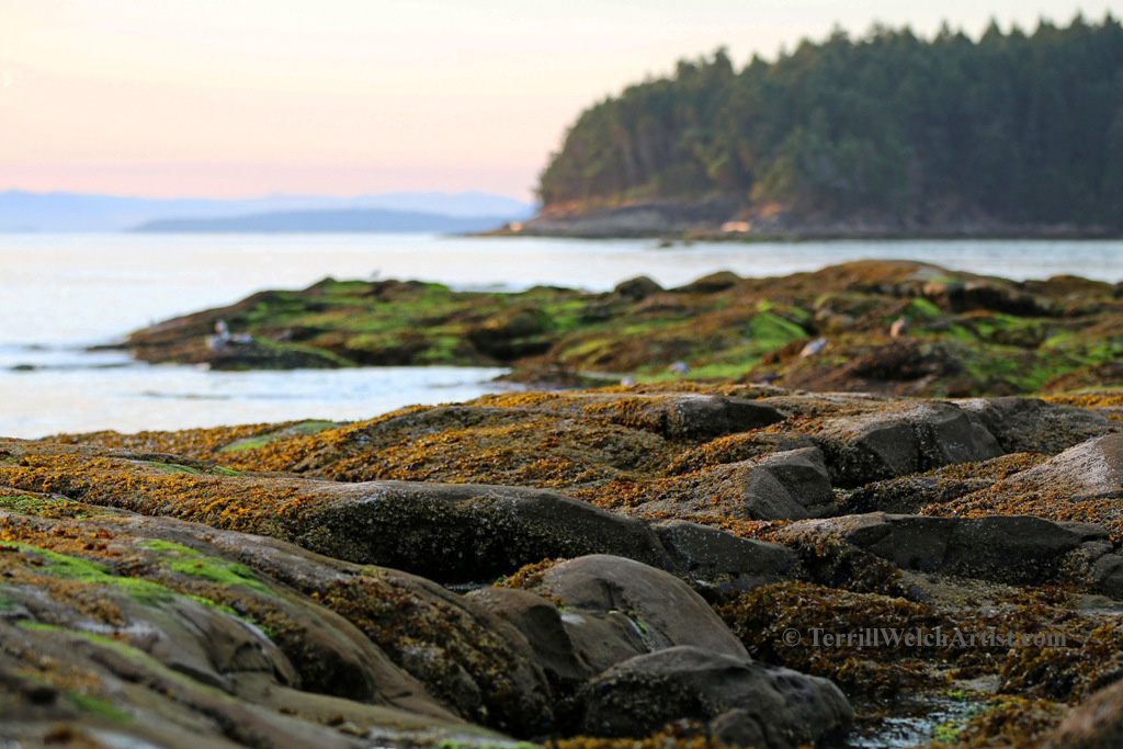 Mayne Island late August morning 6 by Terrill Welch 2015_08_25 057
