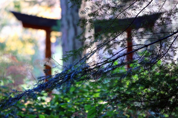 Through the trees in the Japanese Garden on Mayne Island by Terrill Welch 2015_11_26 036