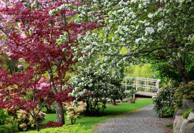 Walking the paths Mayne Island Japanese Garden IMG_2227