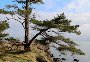 edith-point-moment-by-terrill-welch-january-24-2017-img_9274