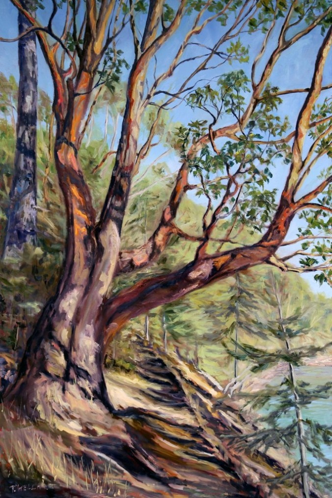 resting-storytelling-arbutus-tree-bennett-bay-mayne-island-bc-60-x-40-inch-oil-on-canvas-by-terrill-welch-img_9532
