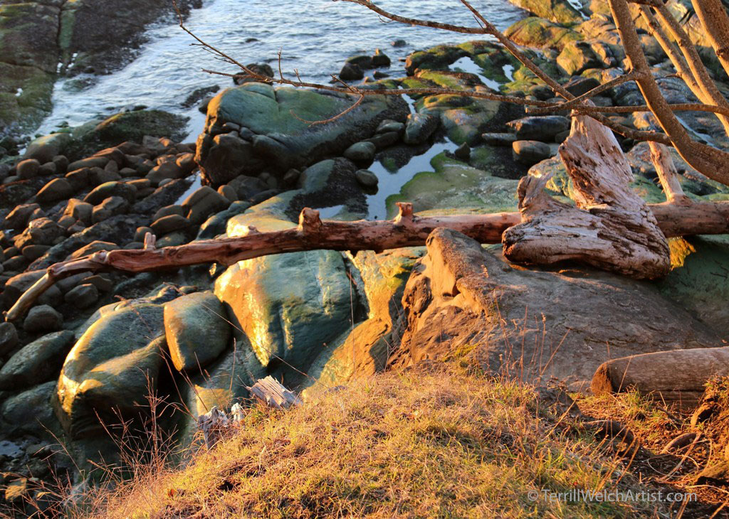 afternoon-sun-on-the-bank-at-georgina-point-mayne-island-by-terrill-welch-img_9565