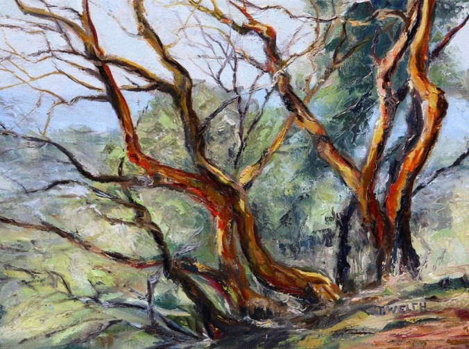 arbutus-on-mt-parke-12-x-16-inch-oil-on-canvas-by-terrill-welch-reworked-dec-11-2016-img_9103
