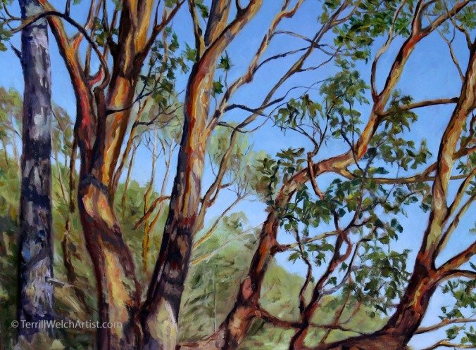 detail-storytelling-arbutus-tree-bennett-bay-mayne-island-bc-60-x-40-inch-oil-on-canvas-by-terrill-welch-img_9827