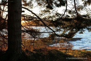 late-afternoon-sun-active-pass-mayne-island-bc-by-terrill-welch-img_9554