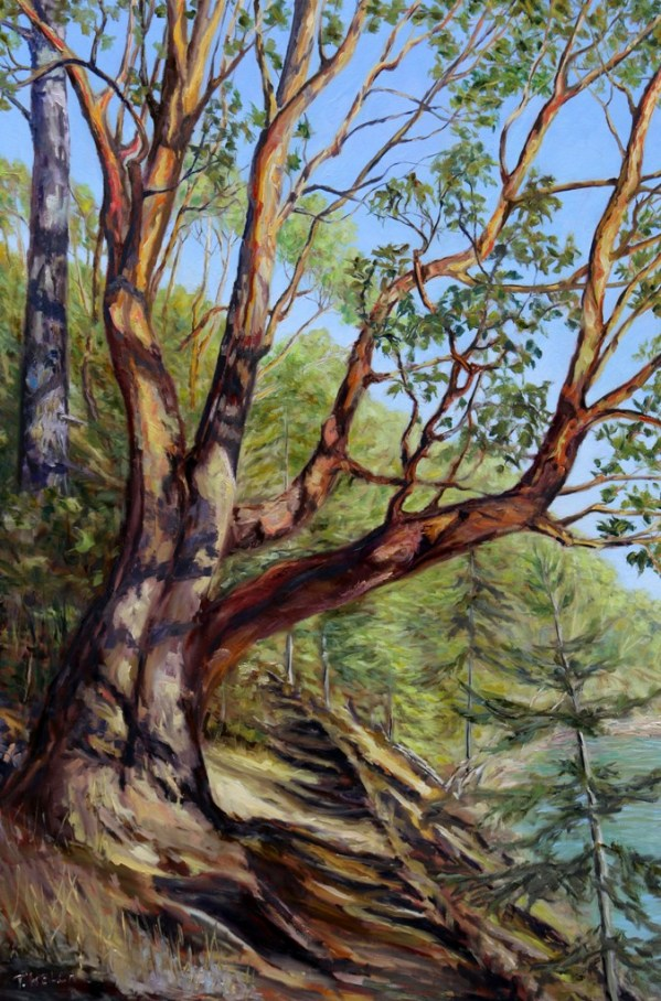 storytelling-arbutus-tree-bennett-bay-mayne-island-bc-60-x-40-inch-oil-on-canvas-by-terrill-welch-img_0405