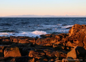 strait-of-georgia-on-a-winter-afternoon-by-terrill-welch-img_9581