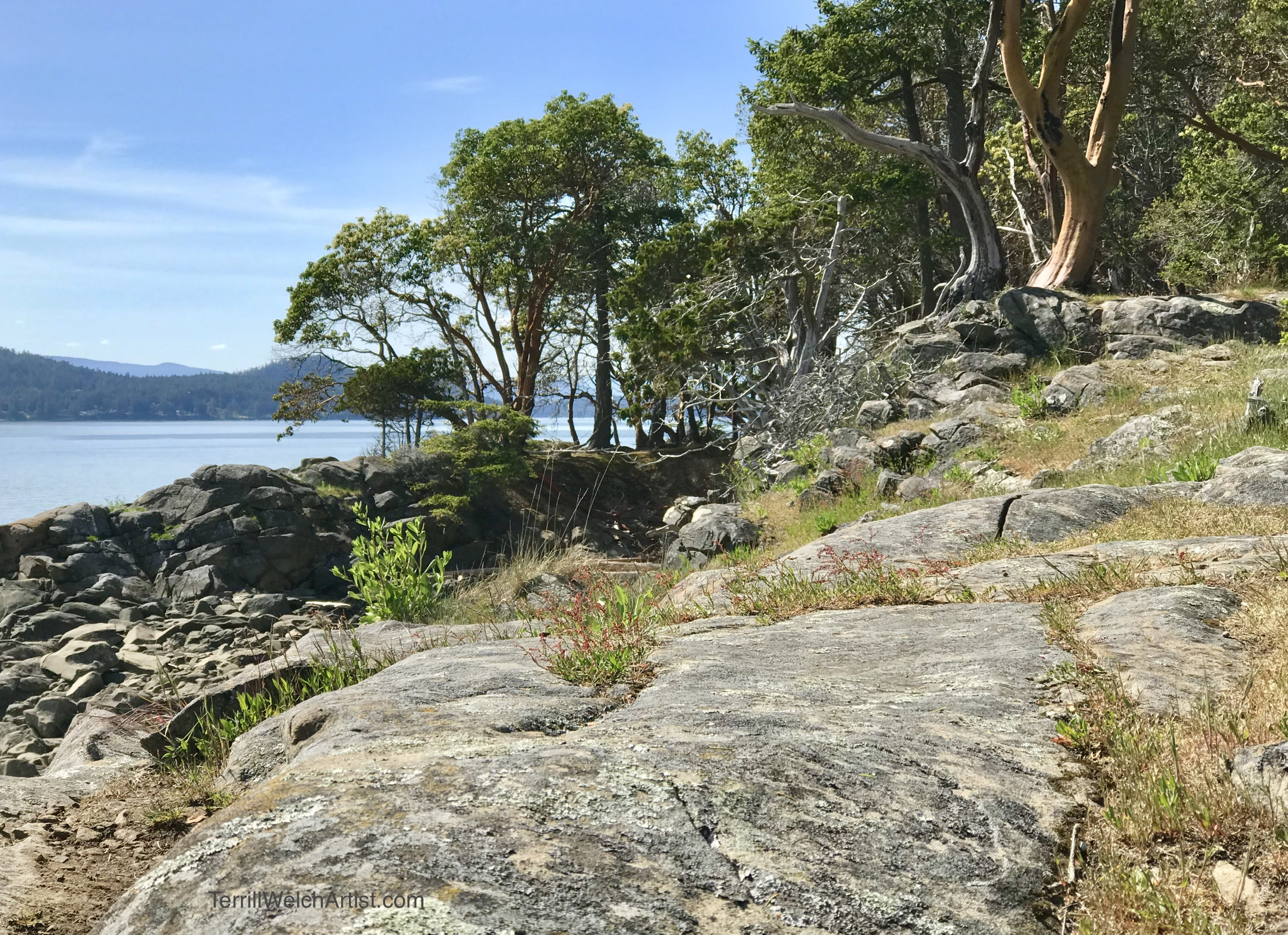 Exposed sunny sandstone point with old arbutus trees beside the sea on Navy Channel at Saint John Point.